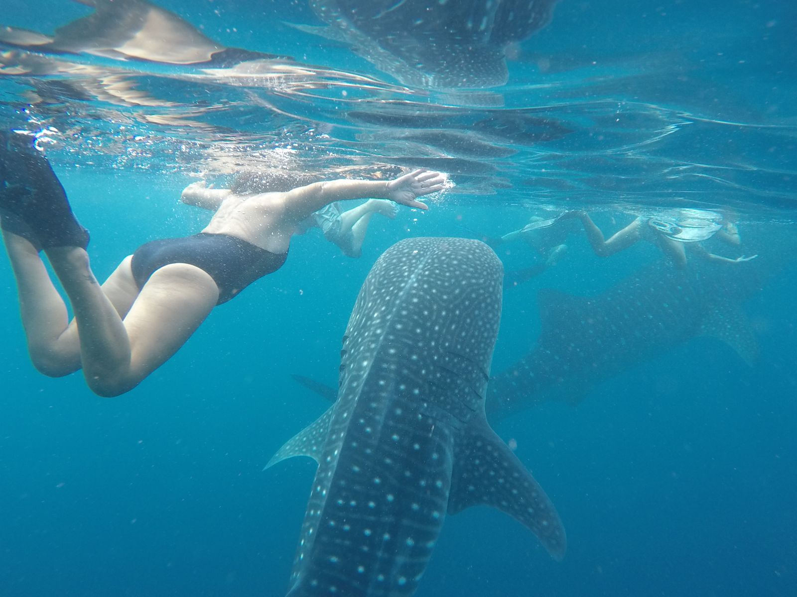 Swimming with Whale Sharks – A Profound, Once In A Lifetime Experience
