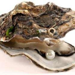 Pearl Culture